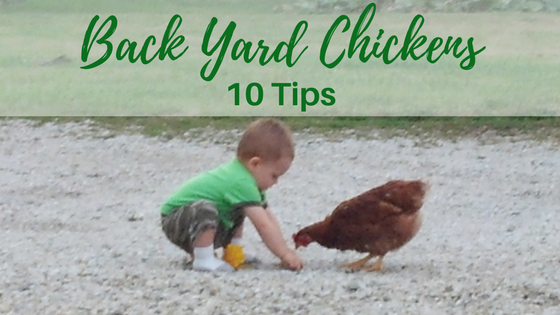10 Tips on Raising Backyard Chickens